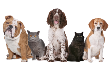 Small pic group of cats and dogs  transparent