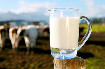 Small pic milk cows generic