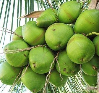 Coco verde produtos