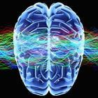 Square pic 140 imgcog neuro1.960.360.c