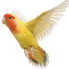 Square pic bird average bird lifespans thinkstock 155253666