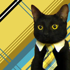 Square pic business cat is all pictures picc 538716